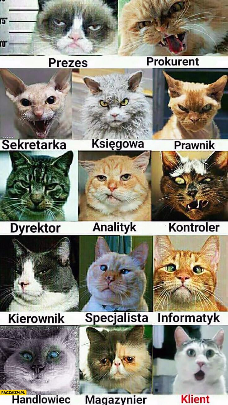 Typowa firma z kotów koty: prezes, prokurent, sekretarka, księgowa, prawnik, dyrektor, analityk, kontroler, kierownik, specjalista, informatyk, handlowiec, magazynier, klient