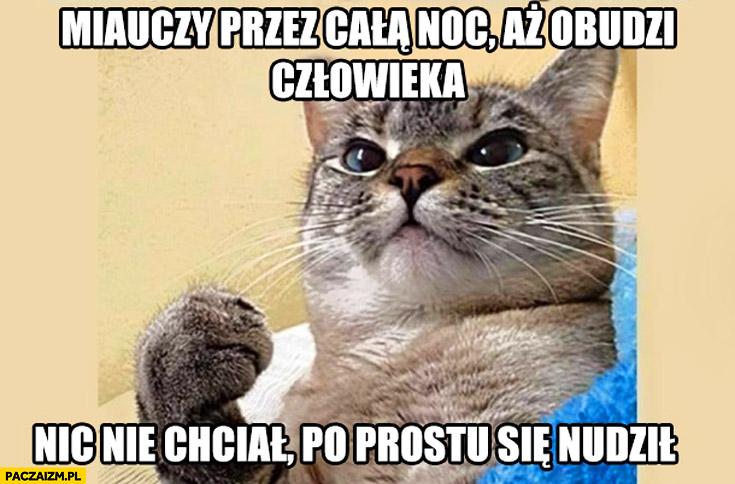 Typowy kot miauczy całą noc aż obudzi człowieka nic nie chciał po prostu się nudził