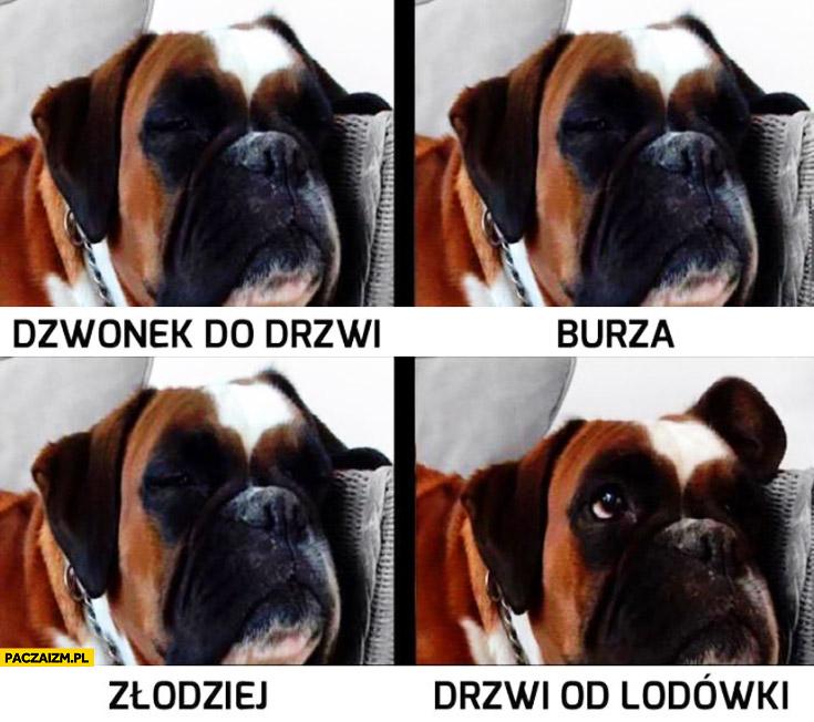 Typowy pies reakcja: dzwonek do drzwi, burza, złodziej, drzwi od lodówki