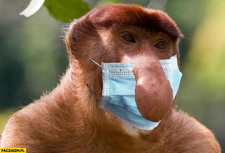 Typowy Polak maseczka na ustach nie zakrywa nosa małpa nosacz