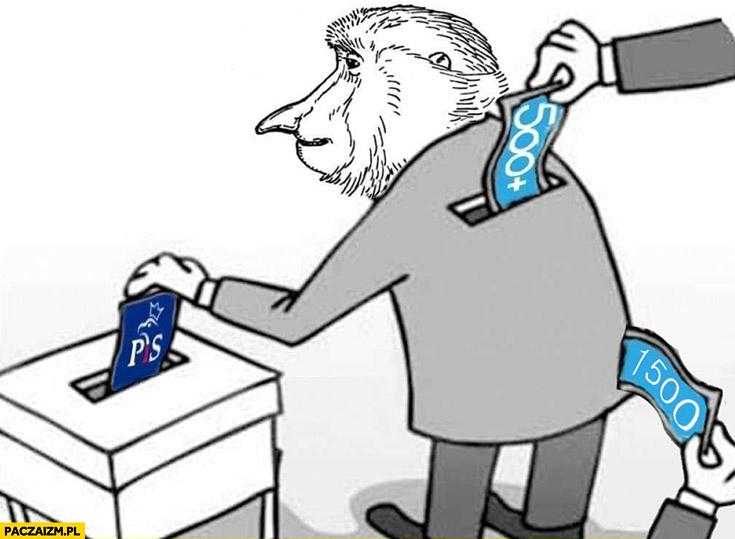 Typowy wyborca PiS Polak małpa dostaje 500 plus z kieszeni zabierają mu 1500