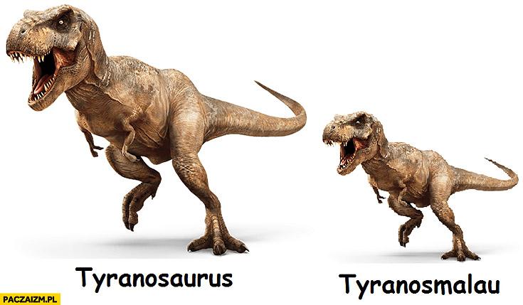 Tyranosaurus Tyranosmalau