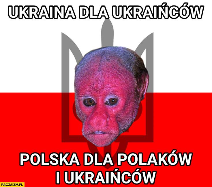 Ukraina dla Ukrainców Polska dla Polaków i Ukraińców typowy Ukrainiec małpa nosacz Polak