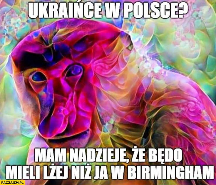 Ukraińce w Polsce mam nadzieje, że będą mieli lżej niż ja w Birmingham typowy Polak nosacz małpa