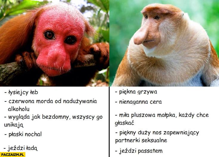 Ukrainiec Polak porównanie małpy nosacz typowy Polak