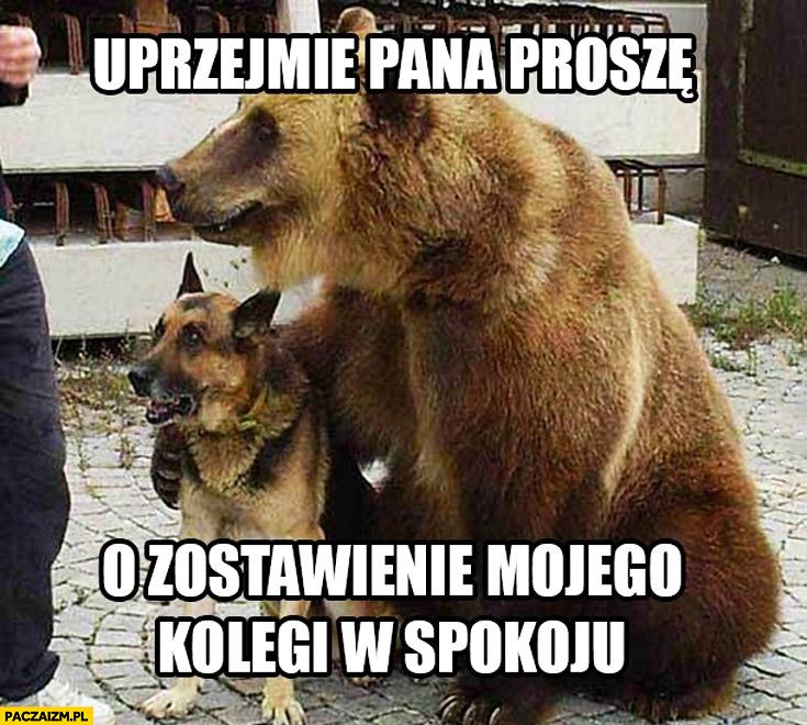 Uprzejmie pana proszę o zostawienie mojego kolegi w spokoju pies niedźwiedź