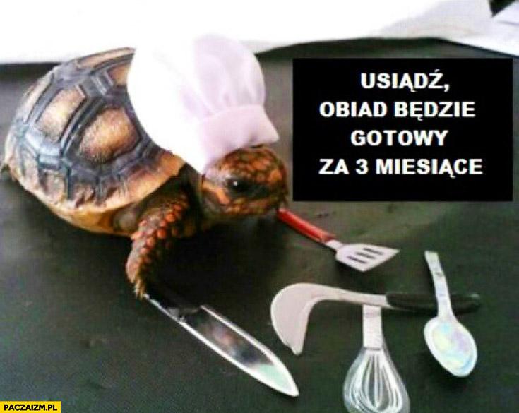 Usiądź obiad będzie gotowy za 3 miesiące żółw