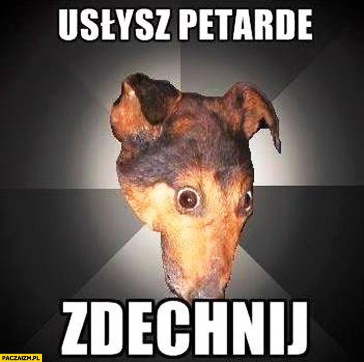 Usłysz petardę, zdechnij pies