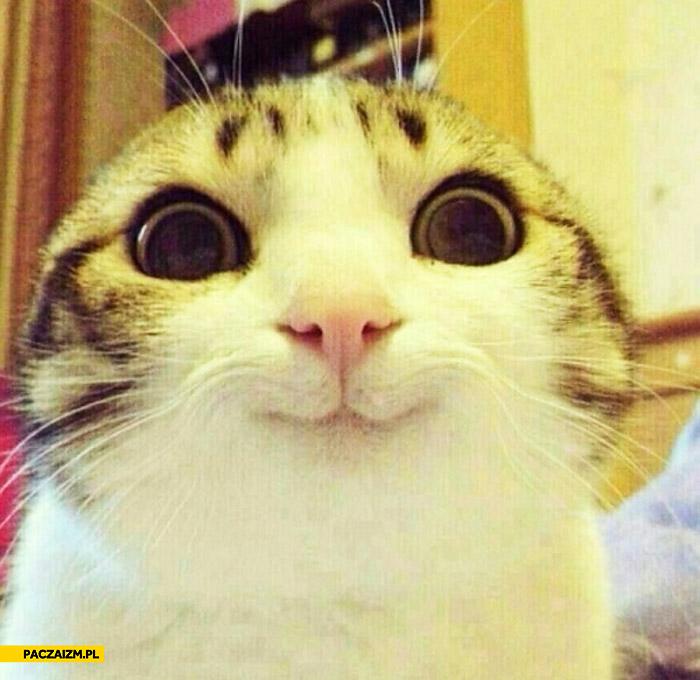 Uśmiechnięty kot