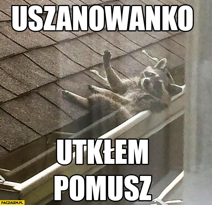 Uszanowanko utkłem pomóż szop pracz w rynnie