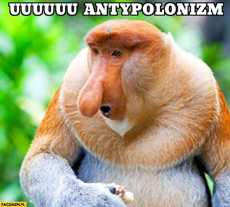 Uuu antypolonizm typowy Polak nosacz małpa