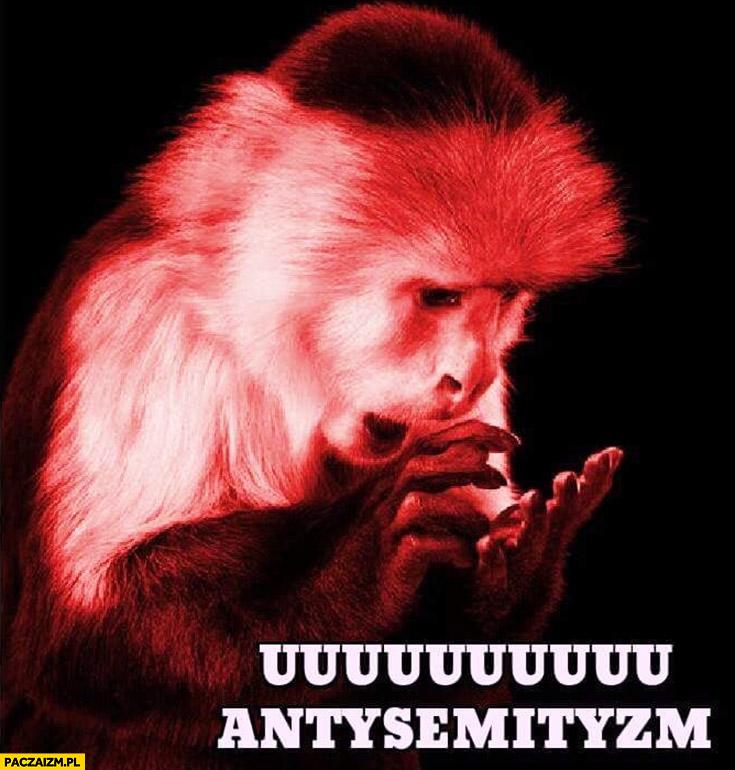 Uuu antysemityzm małpa małpka typowy Żyd
