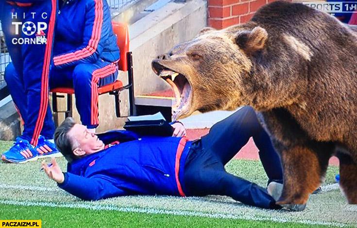 Van Gaal leży niedźwiedź