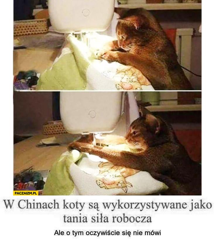 W chinach koty są wykorzystywane jako tania siła robocza ale o tym oczywiście się nie mówi
