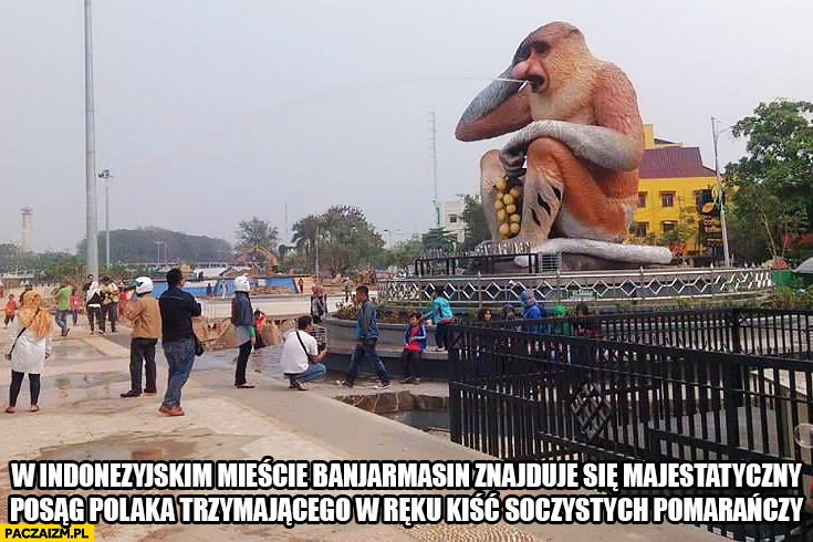 W Indonezyjskim mieście Banjarmasin znajduje się majestatyczny posag polaka trzymającego w reku kiść soczystych pomarańczy typowy Polak nosacz małpa