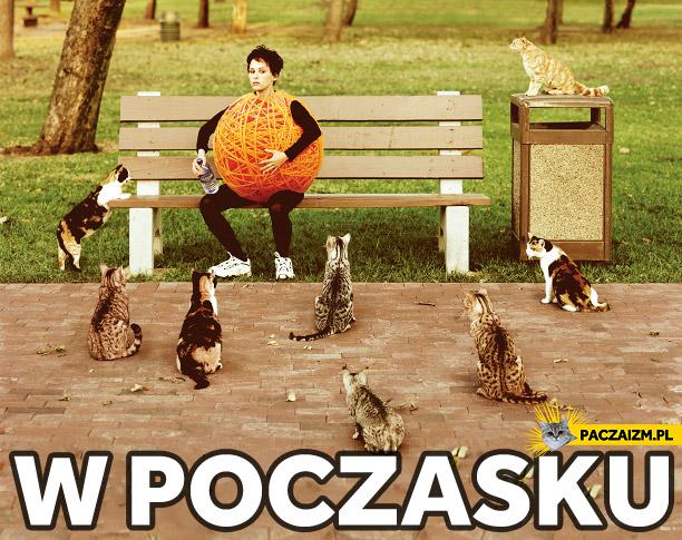 W poczasku, uważajcie na te koty!