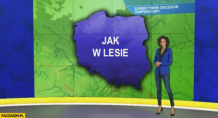 W Polsce jak w lesie prognoza pogody TVN mapka polski subiektywne odczucie temperatury