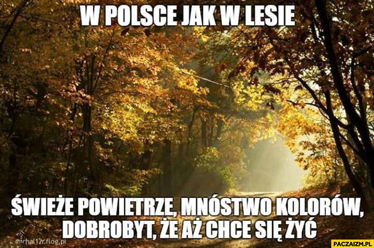 W Polsce jak w lesie świeże powietrze, mnóstwo kolorów, dobrobyt że aż chce się żyć