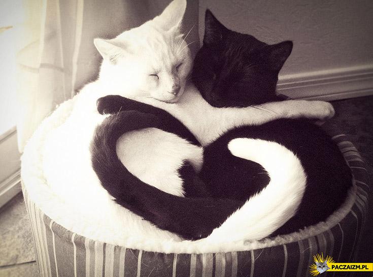 Zakochane koty