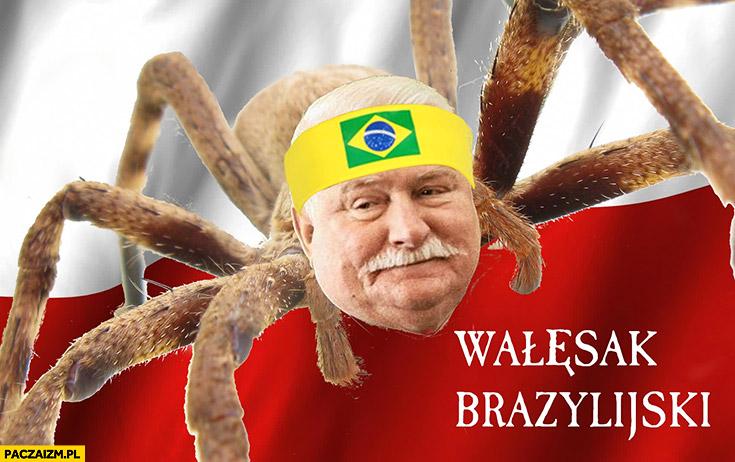 Wałęsak brazylijski pająk Lech Wałęsa przeróbka
