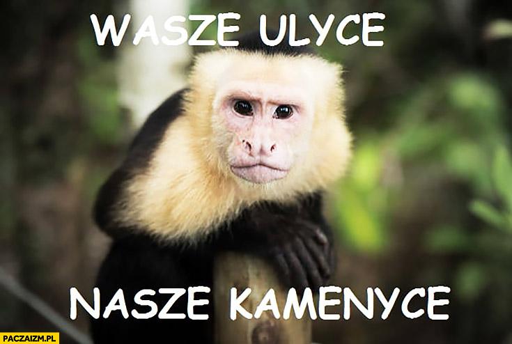 Wasze ulice nasze kamienice małpa małpka typowy Żyd