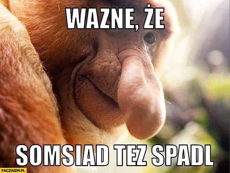 Ważne, że sąsiad też spadł w rankingu FIFA Polska Niemcy typowy Polak nosacz małpa