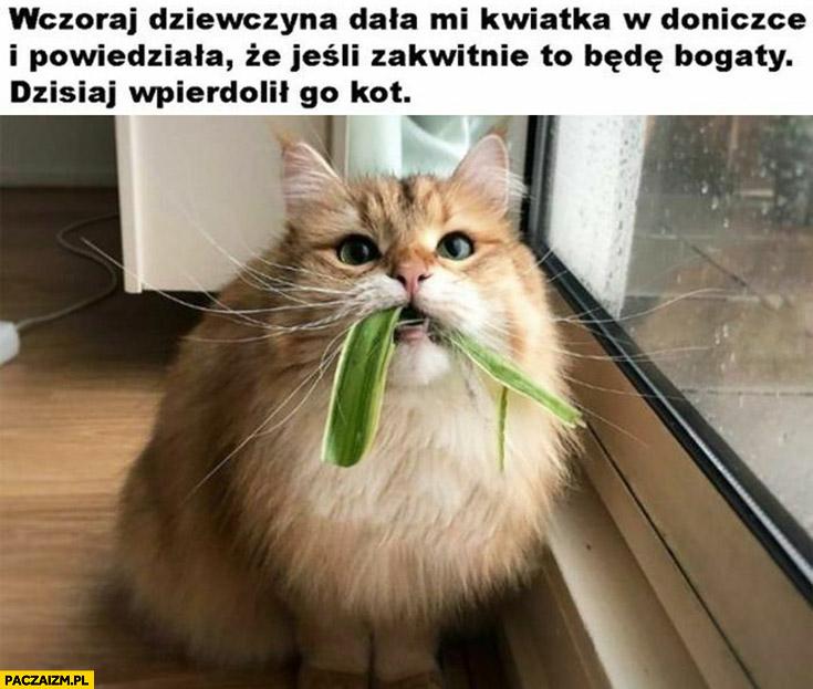 Wczoraj dziewczyna dała mi kwiatka powiedziała, że jeśli zakwitnie będę bogaty dziś wpierdzielił go kot