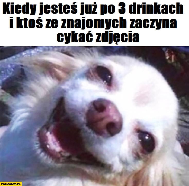 Wesoły pies kiedy jesteś już po 3 drinkach i ktoś ze znajomych zaczyna cykać zdjęcia