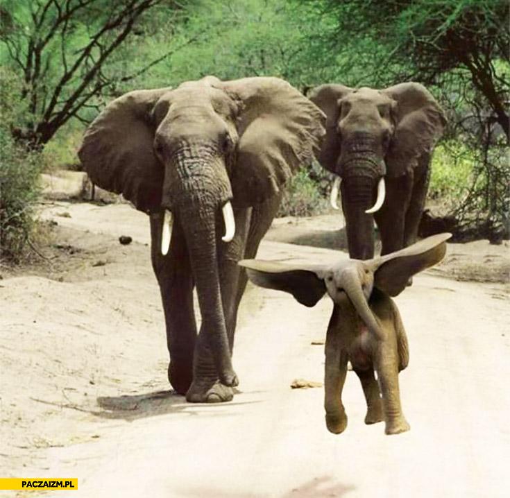 Wesoły słonik