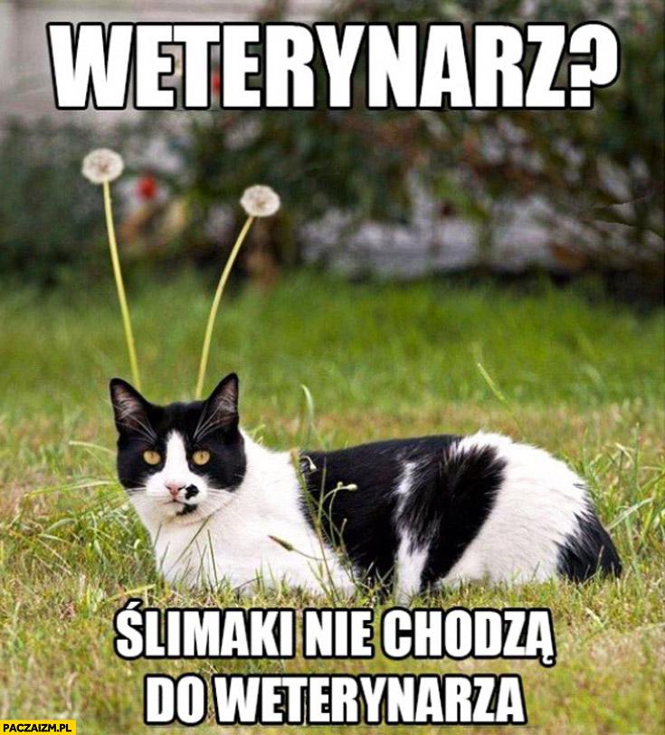 Weterynarz ślimaki nie chodzą do weterynarza kot czułka