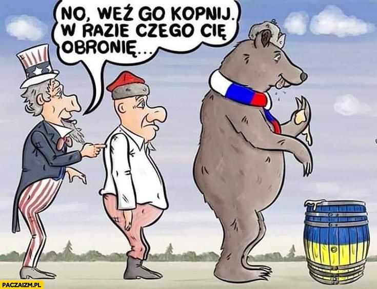 Weź go kopnij w razie czego cie obronię Ameryka Polska Rosja niedźwiedź