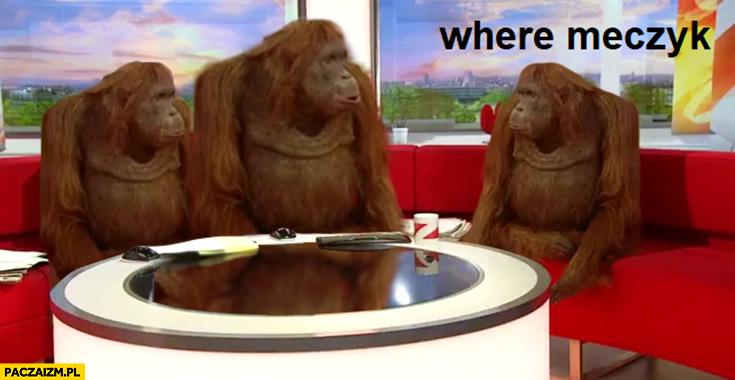 Where meczyk gdzie mecz małpy szympansy orangutany
