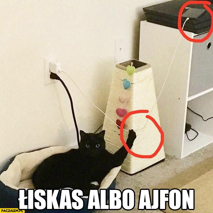 Whiskas albo iPhone kot trzyma za kabel terrorysta łiskas ajfon