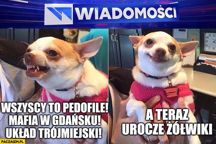 Wiadomości TVP wszyscy to pedofile, mafia w Gdańsku, układ trójmiejski, a teraz urocze żółwiki