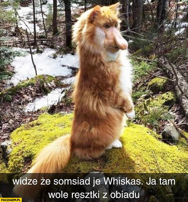 Widzę, że sąsiad je Whiskas, ja tam wolę resztki z obiadu. Kot typowy Polak nosacz małpa