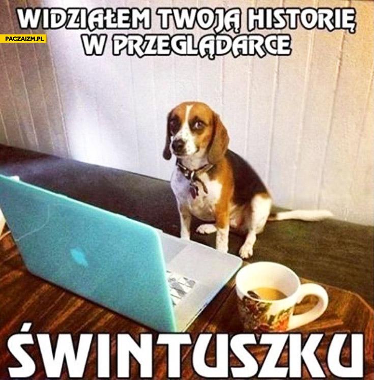 Widziałem Twoją historię w przeglądarce świntuszku pies