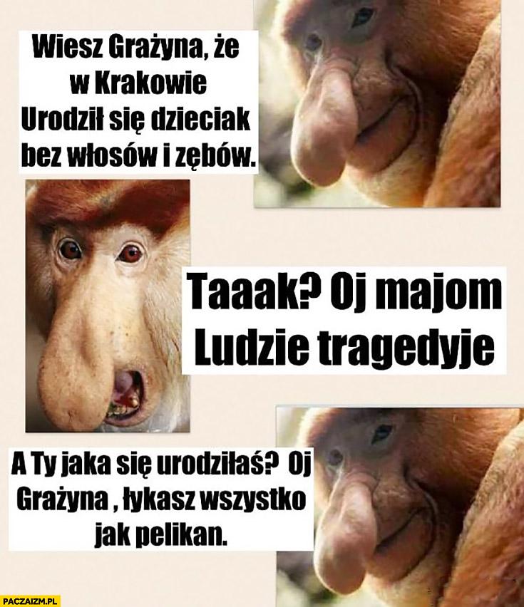 Wiesz Grażyna, że w Krakowie urodził się dzieciak bez włosów i zębów? Oj mają ludzie tragedię, a Ty jaka się urodziłaś oj Grażyna łykasz wszystko jak pelikan typowy Polak nosacz małpa