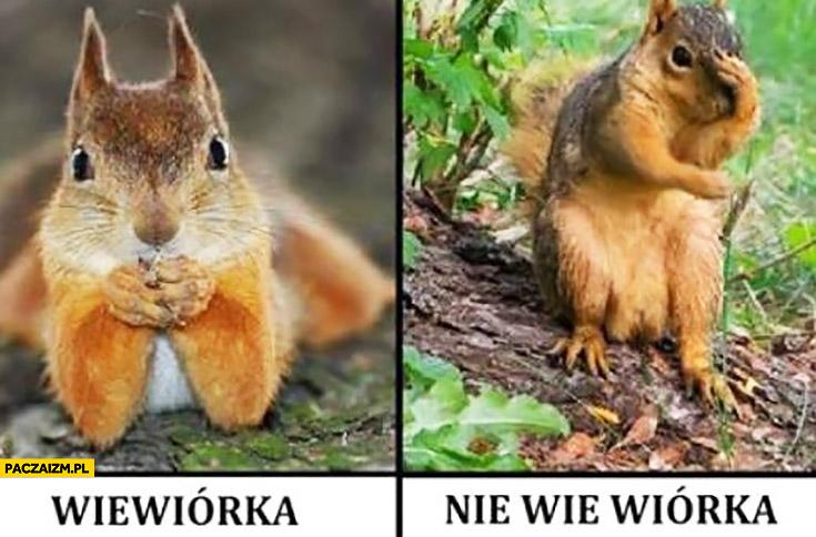 Wiewiórka, nie wie wiórka