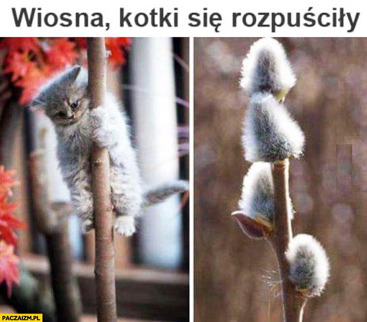 Wiosna kotki się rozpuściły bazie
