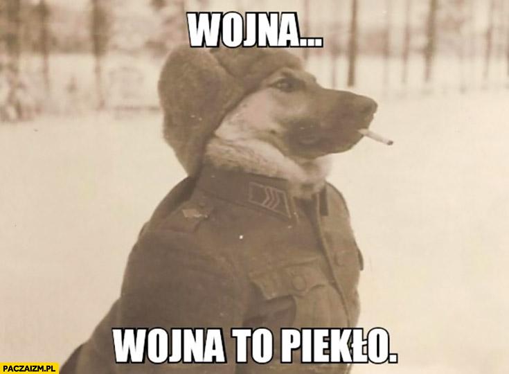 Wojna to piekło pies z papierosem na wojnie