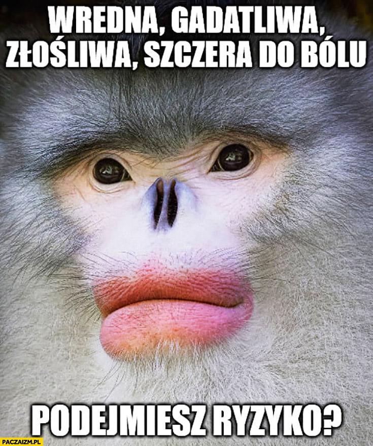 Wredna, gadatliwa, złośliwa, szczera do bólu, podejmiesz ryzyko? Małpa