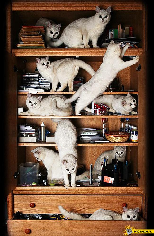 Wszędzie koty