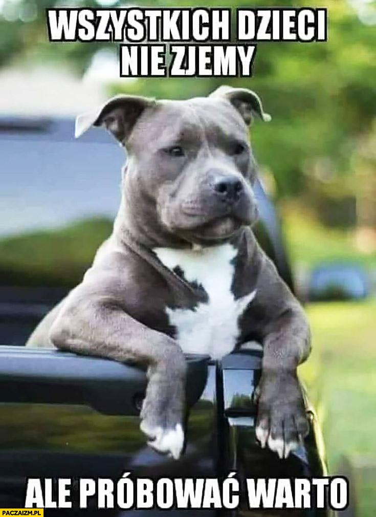 Wszystkich dzieci nie zjemy ale próbować warto pies amstaff pitbull