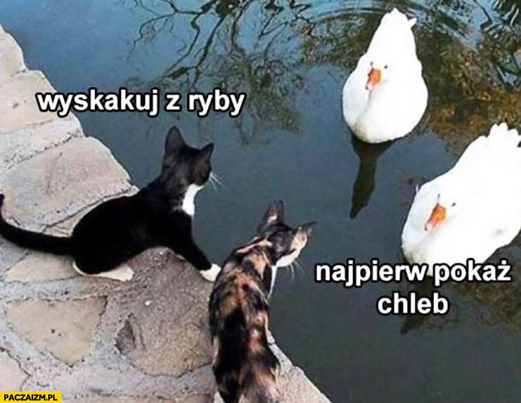 Wyskakuj z ryby, najpierw pokaż chleb koty łabędzie