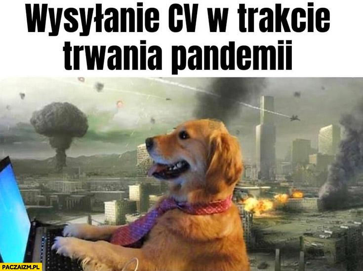 Wysyłanie CV w trakcie trwania pandemii pies