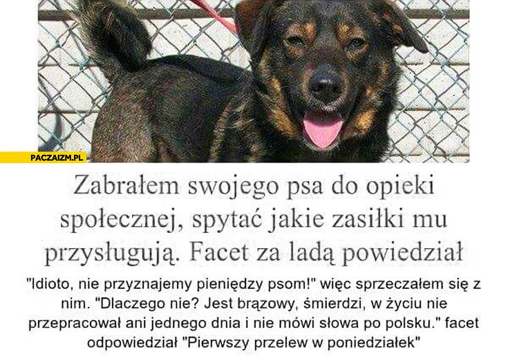 Zabrałem swojego psa spytać jakie zasiłki mu przysługują: jest brązowy, śmierdzi, w życiu nie przepracował dnia, nie mówi po polsku. Pierwszy przelew w poniedziałek