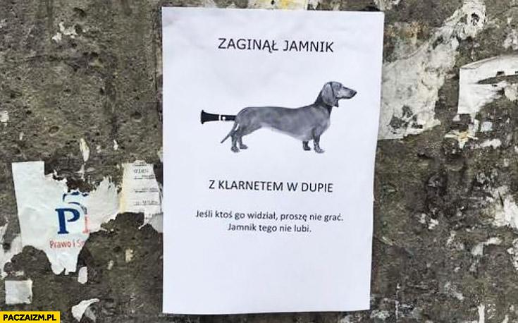 Zaginął jamnik z klarnetem w dupie. Jeśli ktoś go widział proszę nie grać, jamnik tego nie lubi ogłoszenie