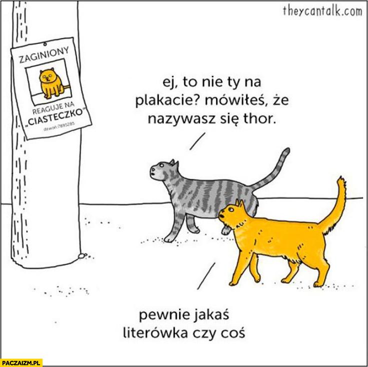 """Zaginiony kot """"reaguje na ciasteczko"""", mówiłeś, że nazywasz się Thor. Pewnie jakaś literówka czy coś"""