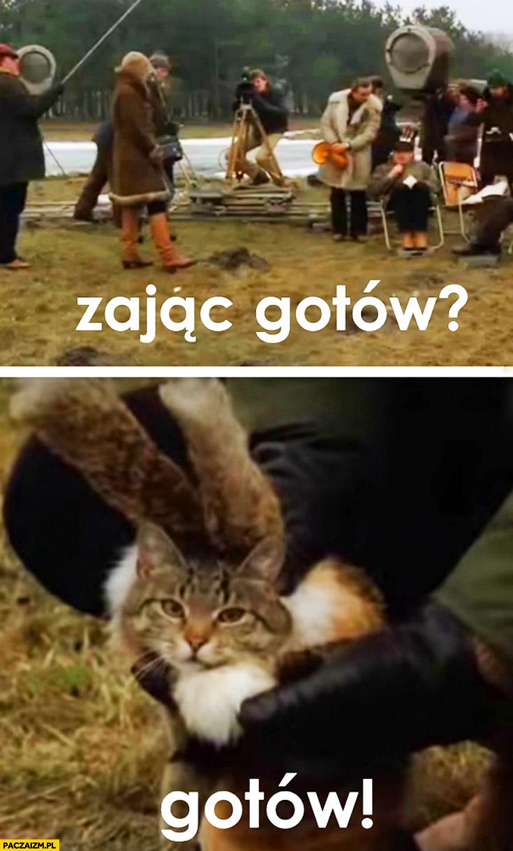 Zając gotów kot w przebraniu plan filmowy