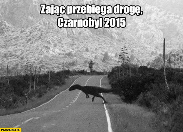 Zając przebiega drogę Czarnobyl 2015 dinozaur
